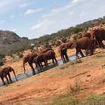 ภาพถ่ายของ Eros Safari Kenya