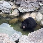 One of the rescued bears in her habitat.