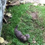 Oscar is one of the rescued otters and loves to visit with the children.