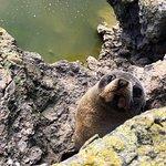 Akaroa Seal Colony Safari Foto