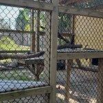 Φωτογραφία: ZooWorld Zoological Conservatory