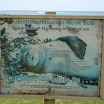 Hawaiian Monk Seal. Often seen basking on the sand or rocks by the path, sign is in kapaʻa.