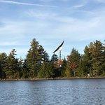 5 Lakes Lodge-billede