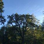 поляны в парке