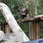 Photo of Phillip Island Nature Parks - Koala Conservation Centre