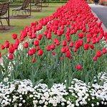 Foto de Government Gardens