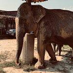 Foto de Elephant Jungle Sanctuary Chiang Mai