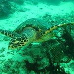 Foto di Mafia Island Diving
