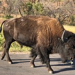 Photo of Wildlife Loop Road