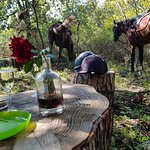 Φωτογραφία: Sicily Horse Riding
