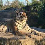 Bild från Shanghai Wild Animal Park