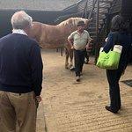 صورة فوتوغرافية لـ Dorset Heavy Horse Farm Park