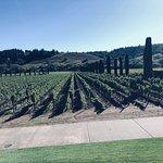 Foto van Ferrari-Carano Winery