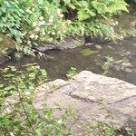 Rivière bordant la crêperie