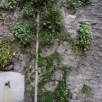 Beautiful wall with plants a few steps from restaurant
