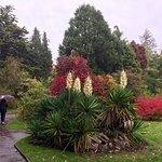 Royal Victoria Park의 사진