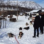 Φωτογραφία: Snowhotel Kirkenes Husky