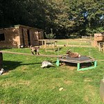Healey's Cornish Cyder Farm