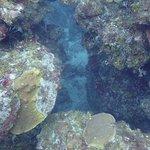 Φωτογραφία: Mar Adentro Diving
