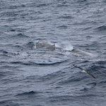 Foto van MobyDick Tours - Whales & Dolphins Watching