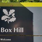 Bilde fra Box Hill