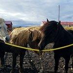 A few of the horses at Dalahestar