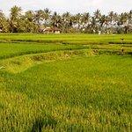 ภาพถ่ายของ Green Bikes Bali