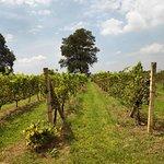ภาพถ่ายของ พีบี วัลเลย์ เขาใหญ่ ไวน์เนอรี่