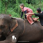 Getting ready for a ride, there are a few options on how to get on an elephant.