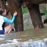 Washing our elephant. The stream is under a water fall so it is running water and warm.