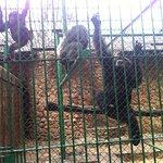 Johannesburg Zoo just monkeying around