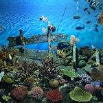 Фотография Аквариум Siam Ocean World