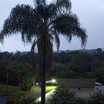 Bilde fra Paradise Palms