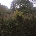 Фотография Askham Bog Nature Reserve