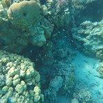 Foto de Sataya Reef