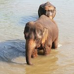Photo of Elephant Rescue Park