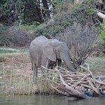 Wild Horizons Zambezi River Cruises