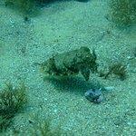 Фотография Indigo Divers – Albufeira Dive Centre