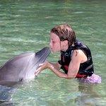 Φωτογραφία: Dolphin Quest