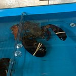 Big lobster in the tank , very clean tank no fishy smell