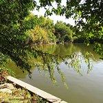 Foto di Tineretului Park