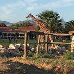 Φωτογραφία: Αττικό Ζωολογικό Πάρκο