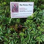 Flora identification markers