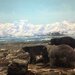Billede af Carnegie Museum of Natural History
