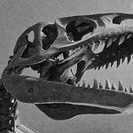 Foto de The Dinosaur Museum