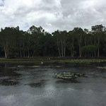 Cairns Botanical Gardens resmi