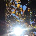 Foto de Forestiere Underground Gardens