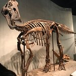 Foto de Denver Museum of Nature & Science