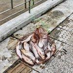 ปลาที่คนในชุมชนตกได้