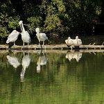 Photo of Safari de Peaugres